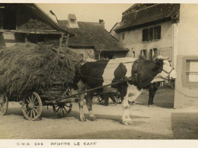 Char à bœuf devant l'Auberge Communale