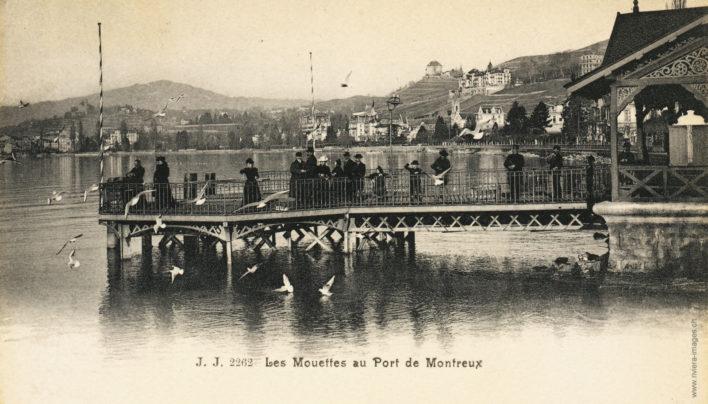Les Mouettes au Port de Montreux - 2262