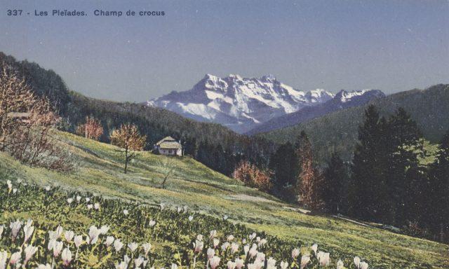 Chalet Les Pives